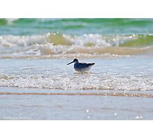 Splashing in the Sea Photographic Print