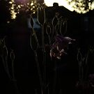 Late, late afternoon by Themis