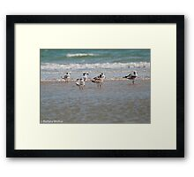 Enjoying the Seabreeze Framed Print