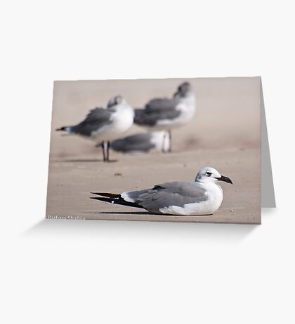Guard Gull Greeting Card