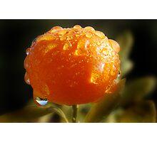 Raindrops On Cumquat Photographic Print