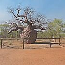 Boab Prison Tree by Margaret  Hyde