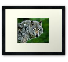 Just a glance Framed Print