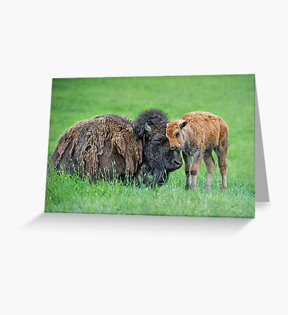 Tenderness expressed Greeting Card
