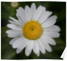 Daisy flower center detail macro  Poster