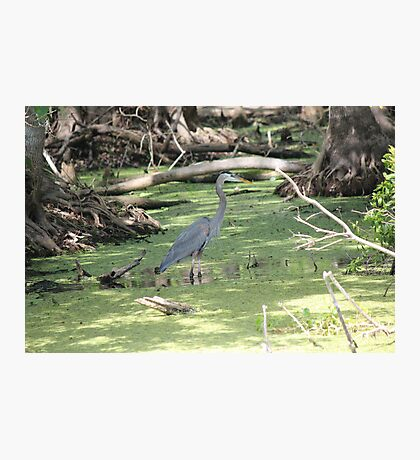 Cypress Cove Photographic Print