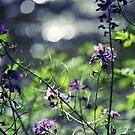 Purple Wildflowers by reindeer