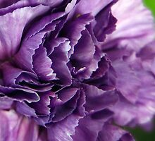 purple petal power by Linda  Makiej