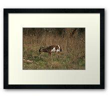 Piebald Columbia Deer Framed Print