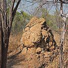 Termite Nest by Margaret  Hyde