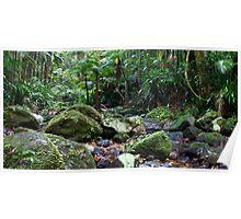 Terania Creek Rocks Poster