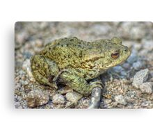 The Toad And The Hitchhiker Metal Print
