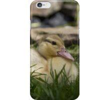 Muscovy duck iPhone Case/Skin