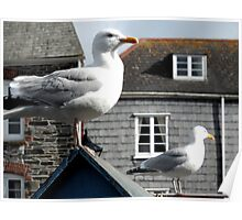 Two Seagulls, Padstow, Cornwall Poster