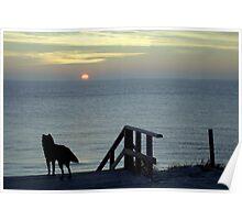 Westenschouwen Beach, Netherlands Poster