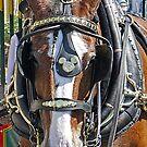 Disney Horse by AmandaJanePhoto