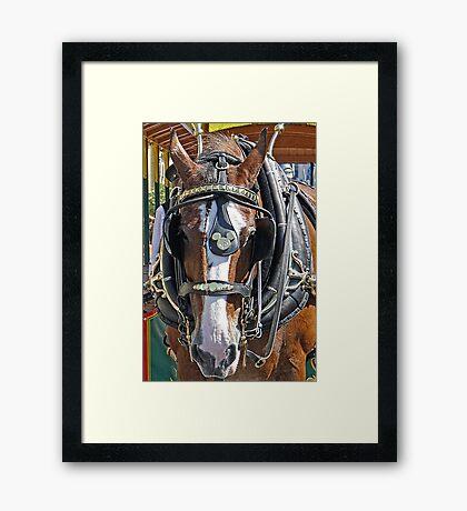Disney Horse Framed Print