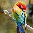 Scarlet Macaw by anchorsofhope