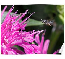 Bees on the flowers Poster