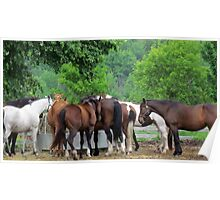 Ranch Horses Poster