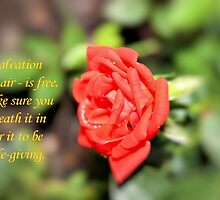 Salvation - Daily Homework - Day 32 - June 8, 2012 by aprilann