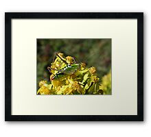 Green Grasshopper on a Yellow Flower Framed Print