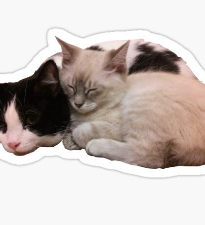 Sleeping Kittens Sticker