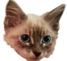 Siemese Kitten  by Mehdals