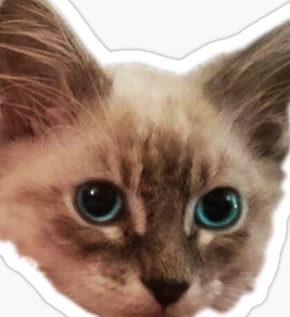 Siemese Kitten  Sticker