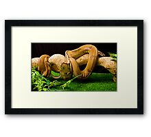 Mother and Babies out on the prowl Framed Print