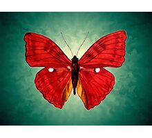 red Butterfly acrylic painting Photographic Print