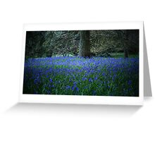 spring at Sheffield Park, East Sussex, UK Greeting Card
