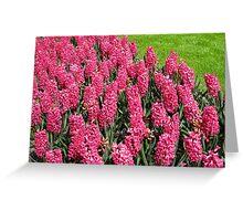 Sea of Pinks - Keukenhof Hyacinths Greeting Card