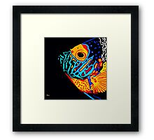 Angel Fish Swimming in the Deep Framed Print