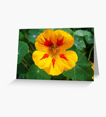 Jewels of Nature Greeting Card