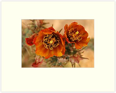 Buckhorn Cholla by Vivian Christopher