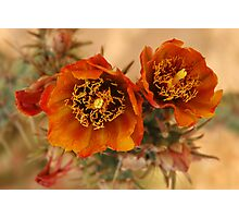 Buckhorn Cholla Photographic Print