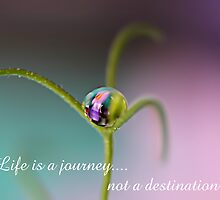 Life is a Journey by Liane Pinel