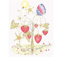 Maypole Strawberries and The Jubilee Butterfly Photographic Print