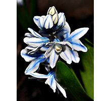 Beautiful Blue and white flower Photographic Print