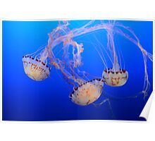 Jellyfish Ballet Poster