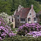 Rhododendrons at Scotney Castle by howardcar