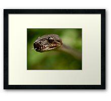The Stalker Framed Print