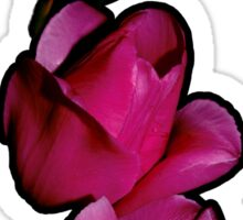 Three Tulips of Fuchsia-Red Sticker