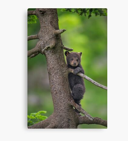 Safety First Canvas Print