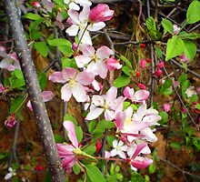 blossoms in the woods by Linda  Makiej