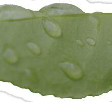 A Green Watery Leaf Sticker