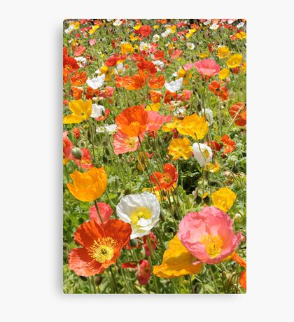 Poppy Field, Orange Pink White and Yellow flowers Canvas Print