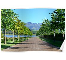 Stellenbosch Wine Country Poster