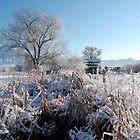 Winter Wonderland by Nicole  Markmann Nelson